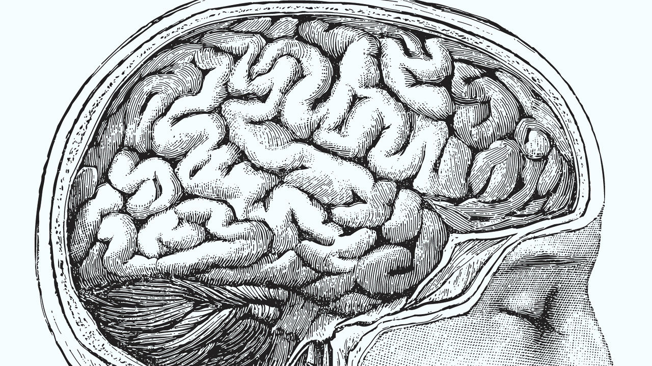 3018564-poster-1280-brain